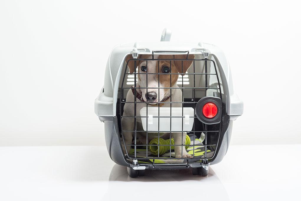 uçakta hayvan taşınması
